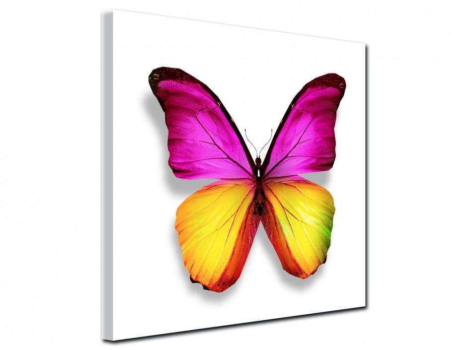 Cadre deco moderne Papillon