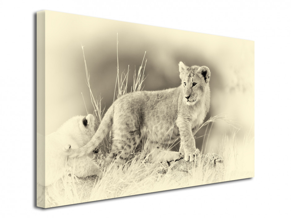 Tableau photo déco le LION Blanc
