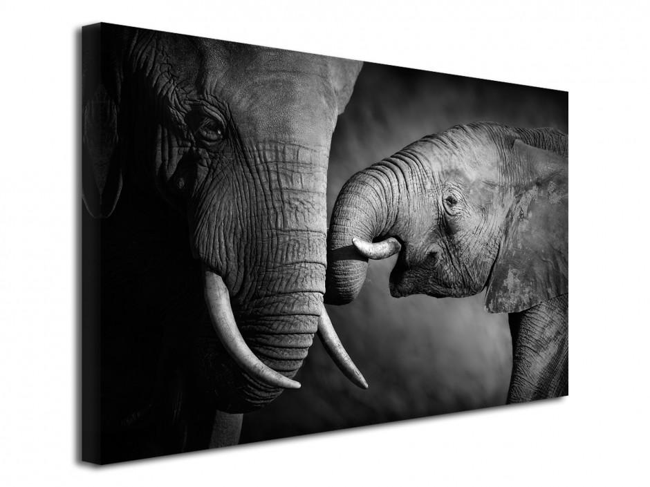 Tableau déco photo  L'éléphant et sa mére