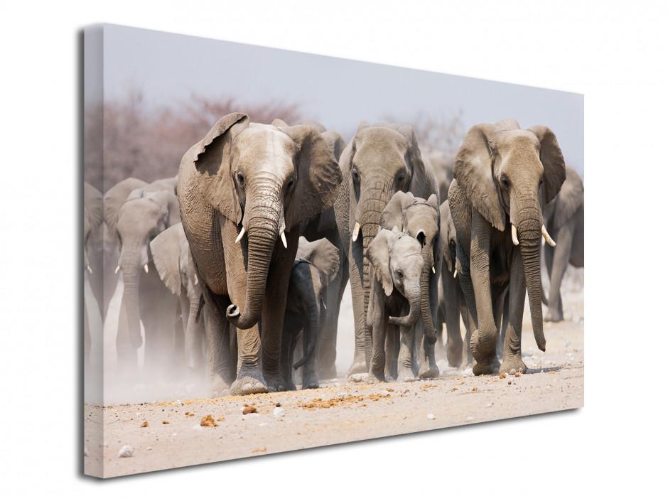 Tableau décoration murale les Eléphants