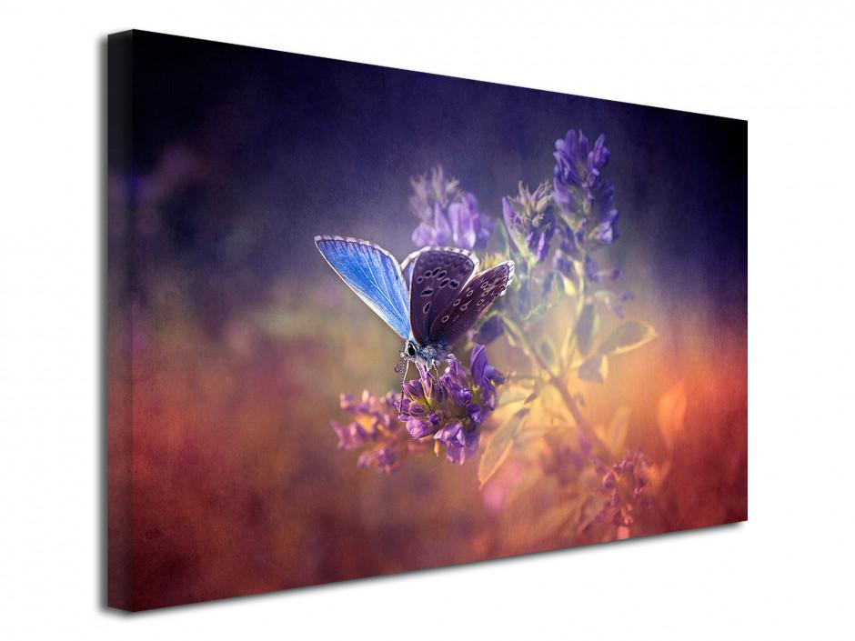 Tableau décoratif Papillons colorés