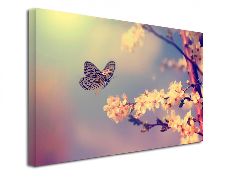 Cadre déco photo Papillons