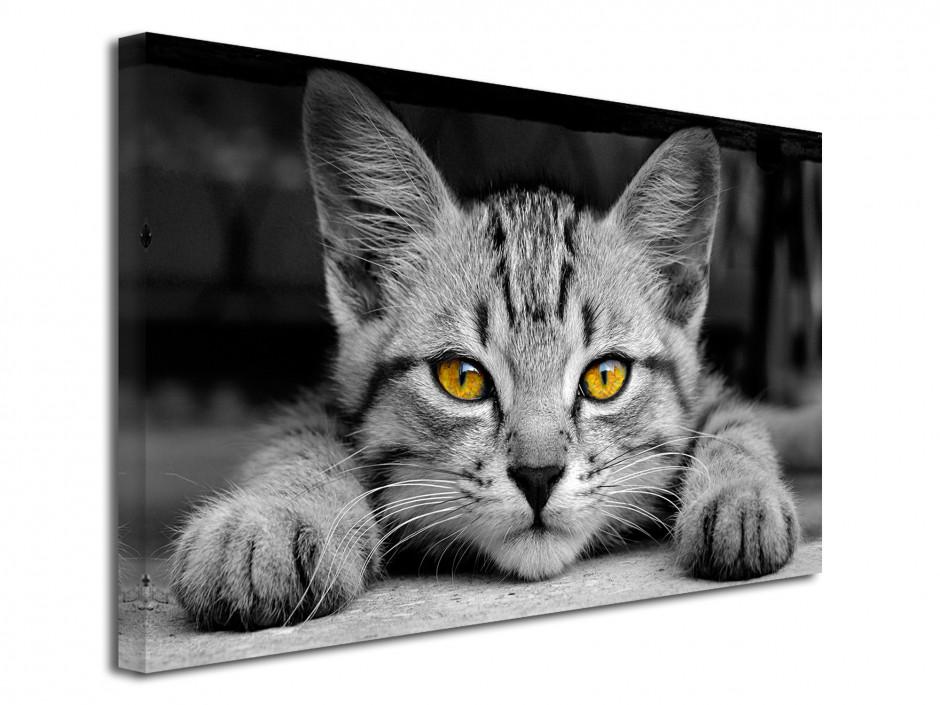 Tableau décoratif Le petit Chat