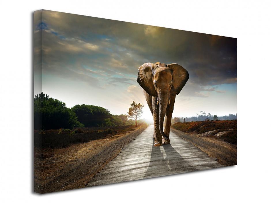 Tableau décoratif Eléphant