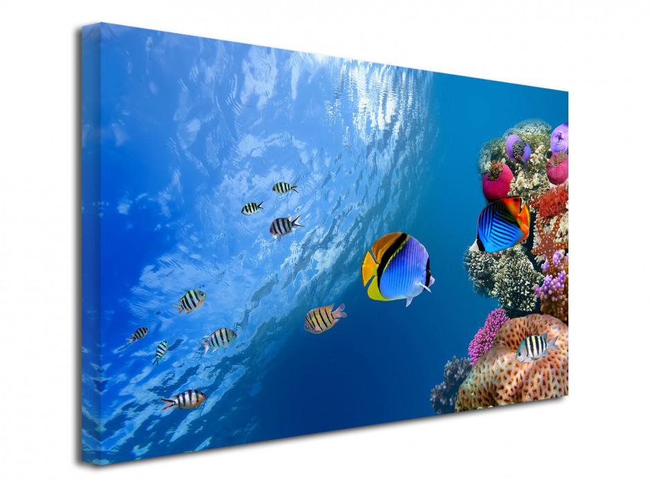 Tableau décoratif Le monde sous marin