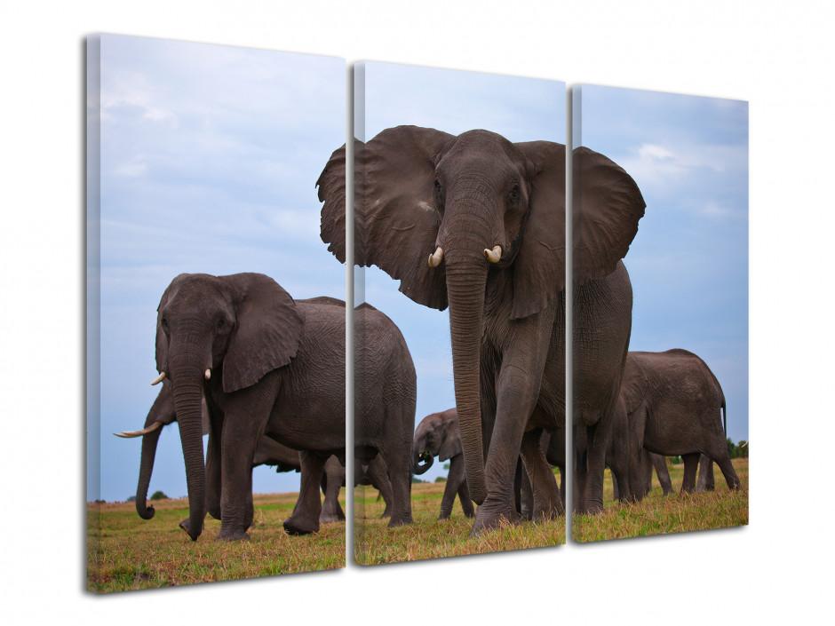 Tableau déco animalier éléphant