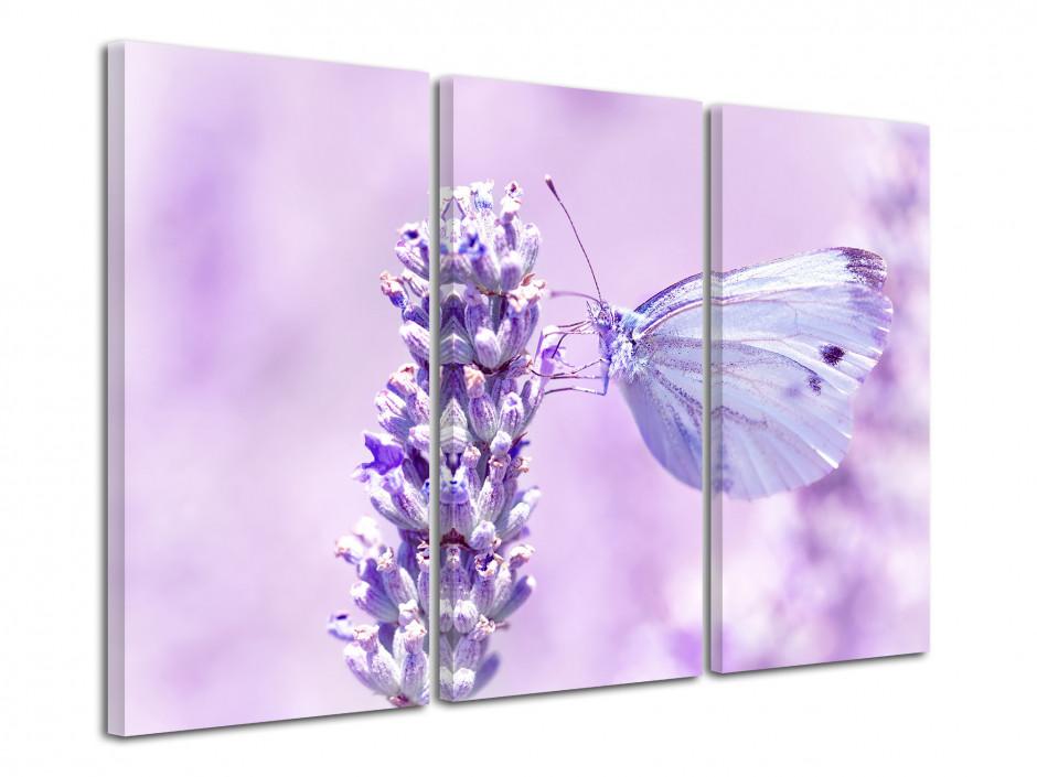 Tableau décoratif papillon bleu
