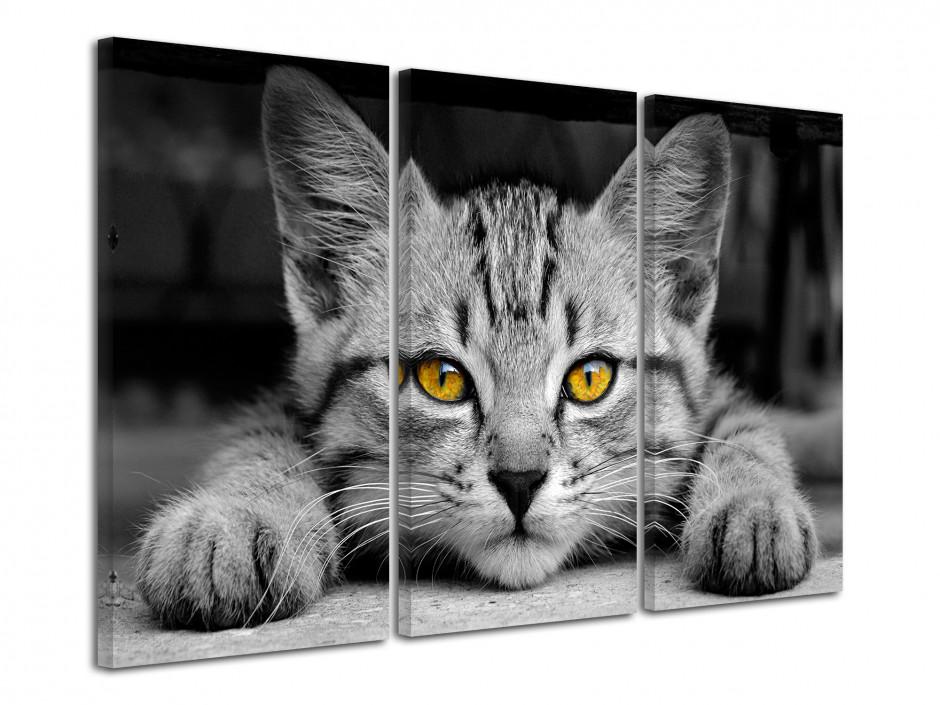 Tableau décoratif Le Petit Chat Gris