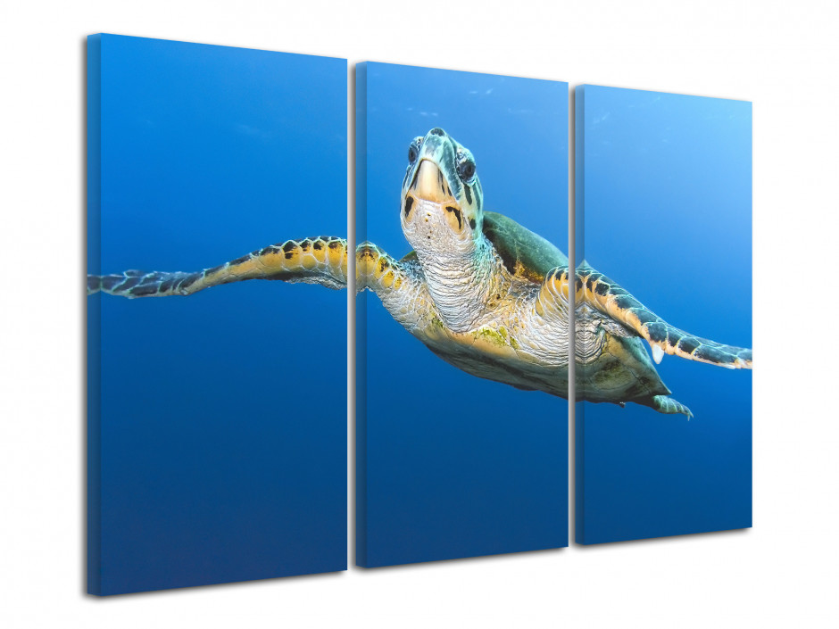 Tableau photo mer Tortue Géante