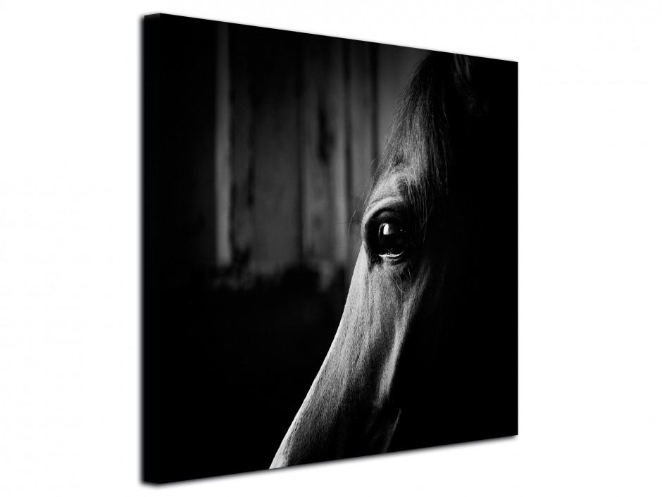 Tableau photo toile imprimée portrait Cheval