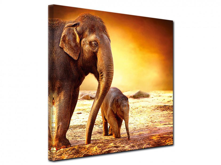 Tableau toile décorative l'éléphanteau et sa maman
