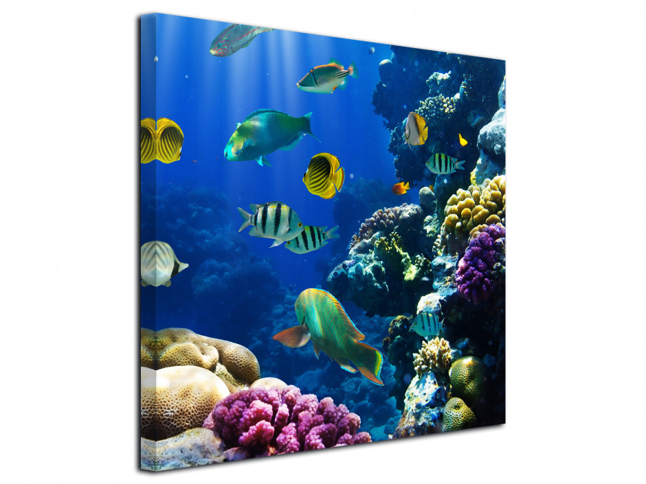 Tableau photo le monde de Nemo