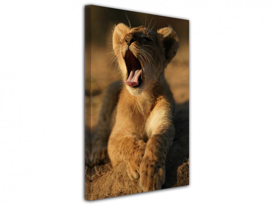 Tableau le lionceau au réveil