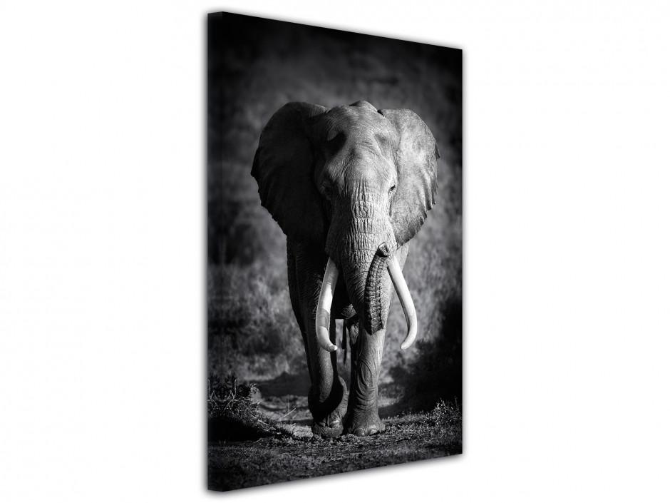 Tableau photo L'éléphanteau en noir et blanc
