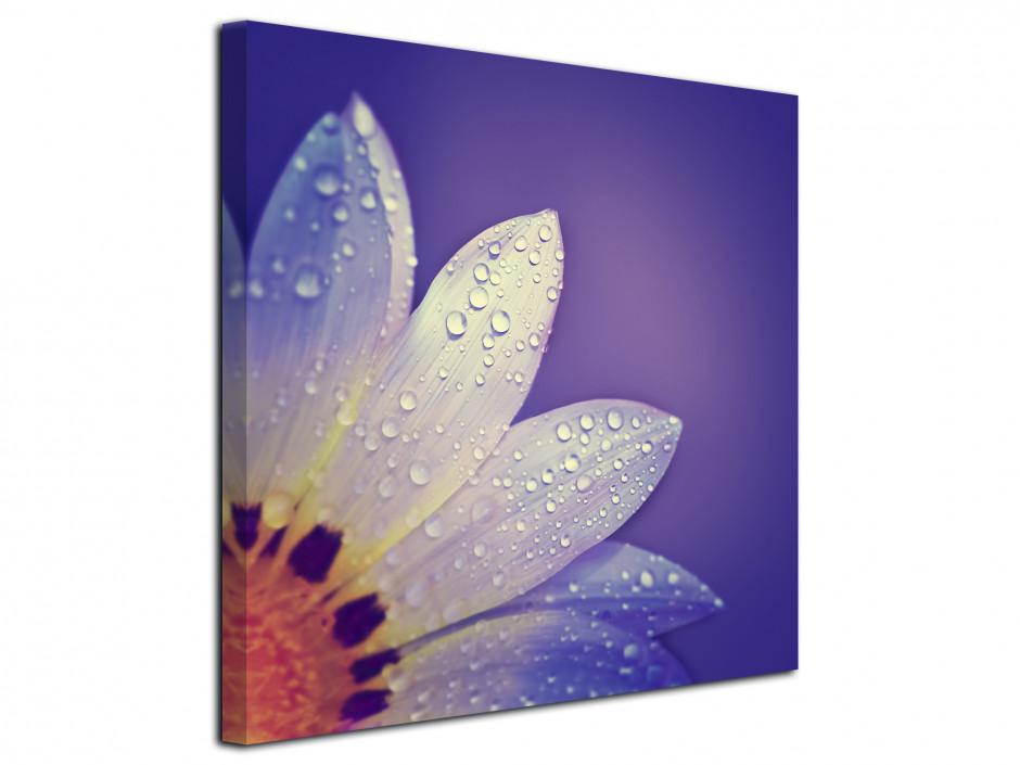 Tableau deco pétale de fleurs violet