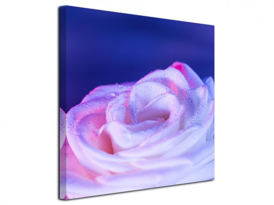 Tableau toile deco Rose violette