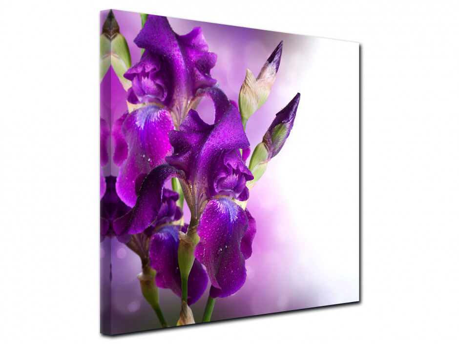 Tableau toile deco Fleurs d'Iris