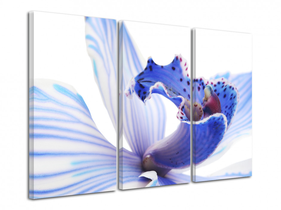 Tableau triptyque Orchidées