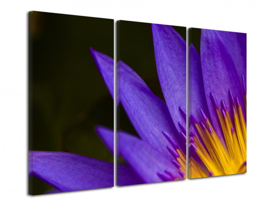 Tableau toile Déco Fleurs de Lotus