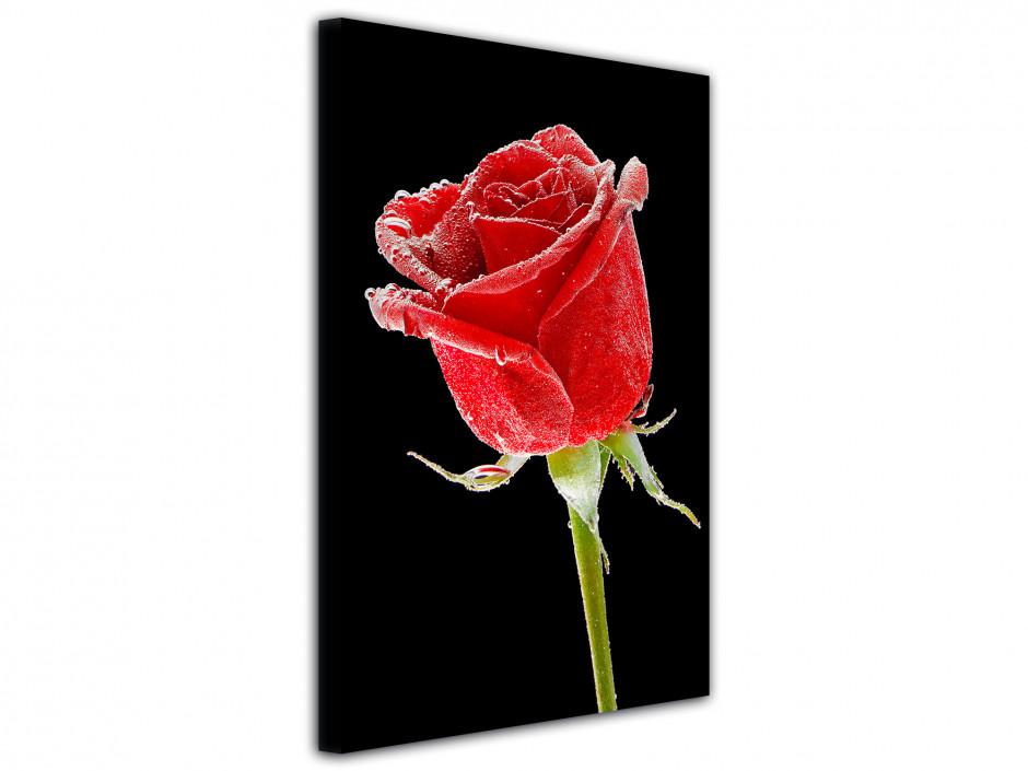 Tableau deco rose sur fond noir