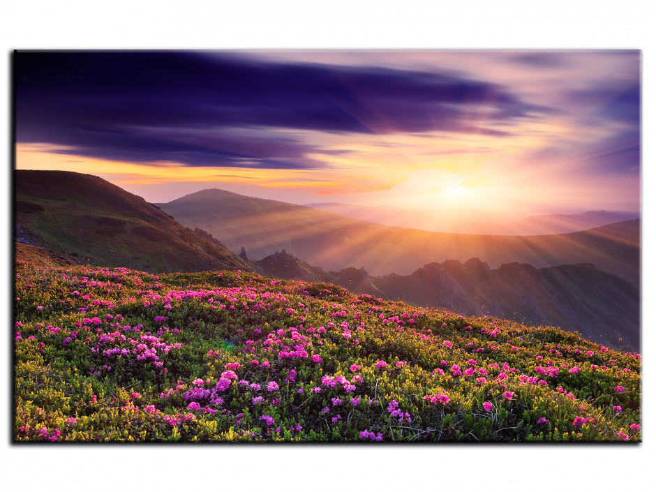 Tableau photo paysage MONTAGNE FLEURIE