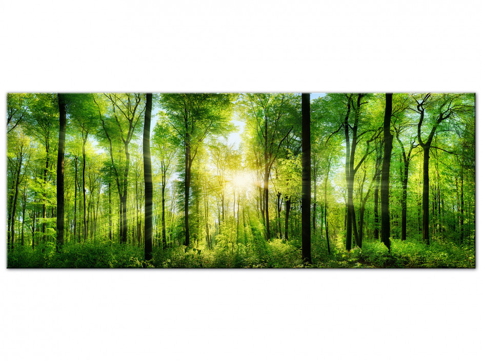Tableau Aluminium photo FORET VERTE
