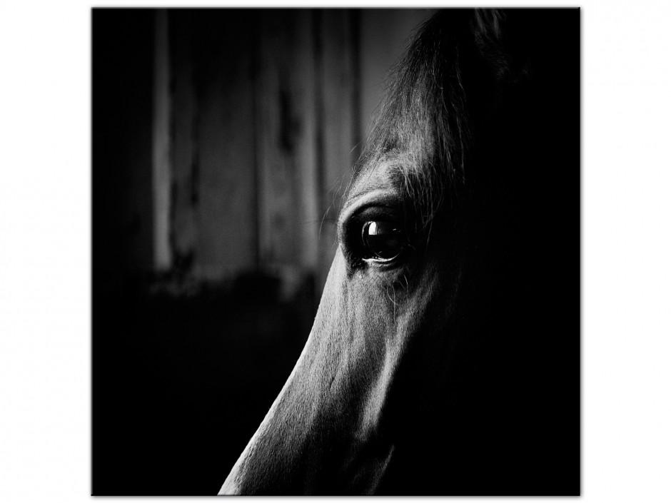 Tableau photo aluminium portrait Cheval