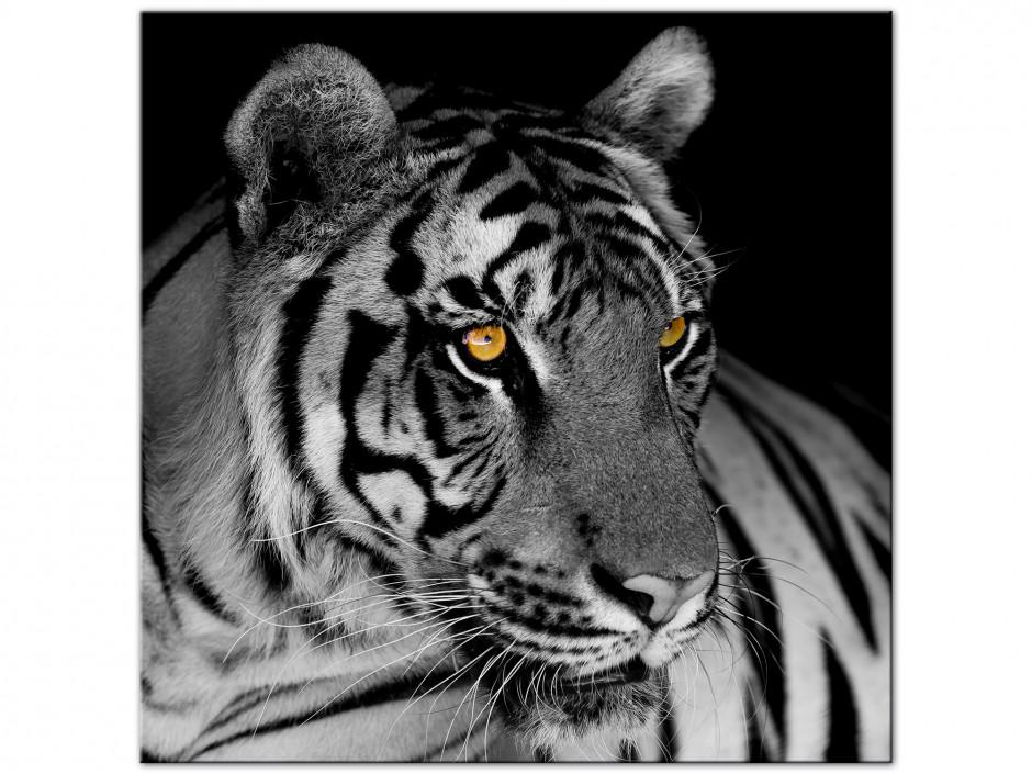 Tableau aluminium photo le Tigre Blanc