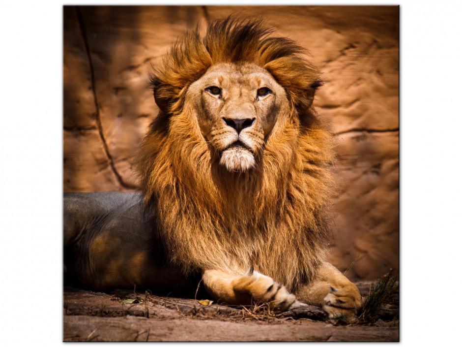 Tableau aluminium le roi Lion