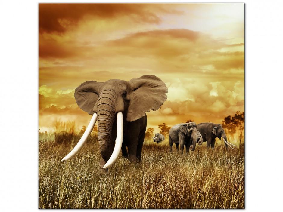 Tôle plaque chambre des enfants animal éléphant safari en Afrique