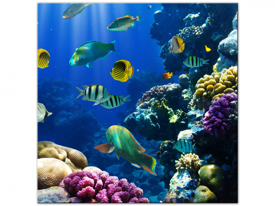Tableau aluminium le monde de Nemo