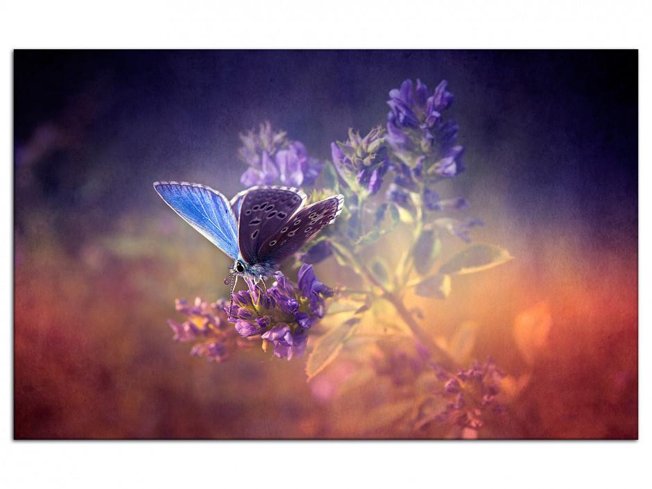 Tableau aluminium décoratif Papillons colorés