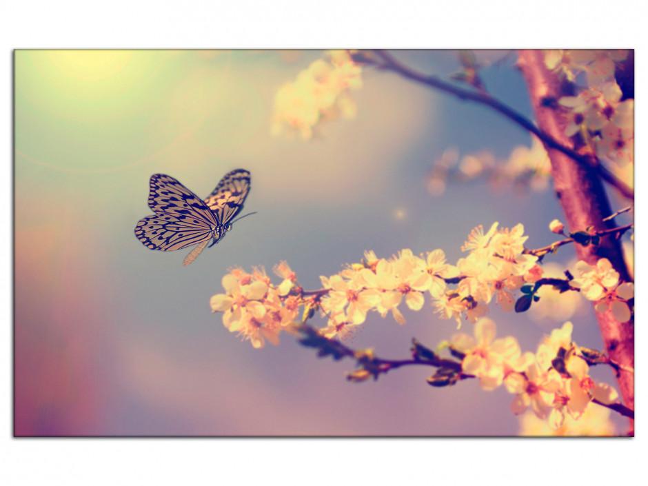 Cadre aluminium déco photo Papillons