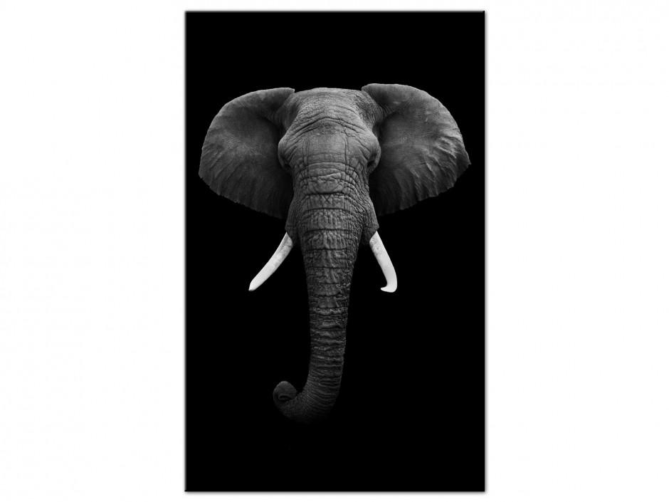 Tableau aluminium décoratif animaux Elephant