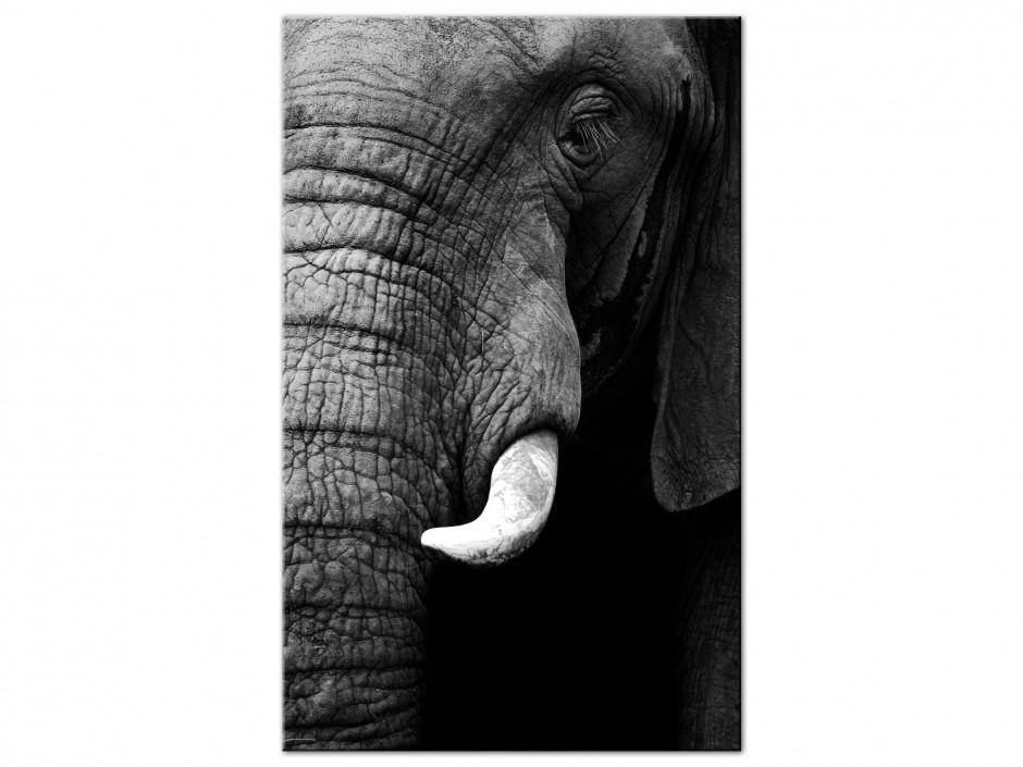 Tableau aluminium original éléphant