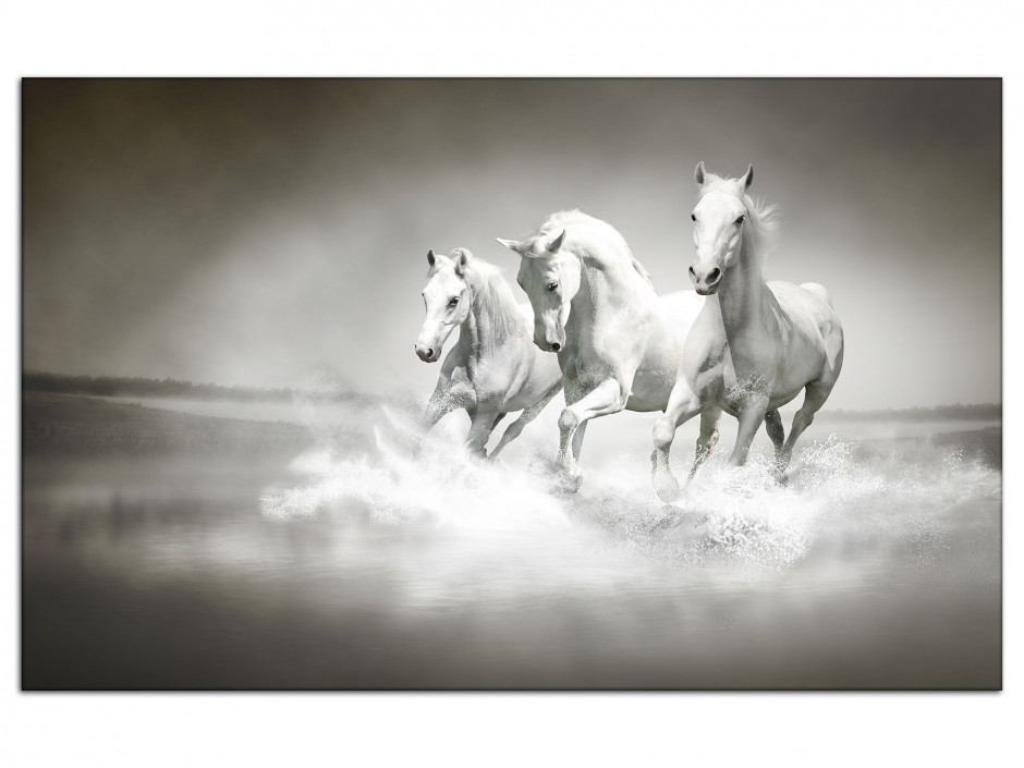 Tableau aluminium photo les 3 Chevaux