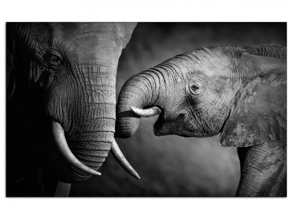 Tableau aluminium déco photo  L'éléphant et sa mére