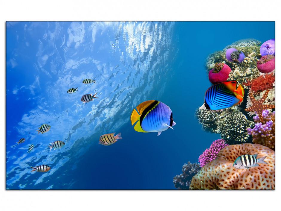 Tableau aluminium décoratif Le monde sous marin