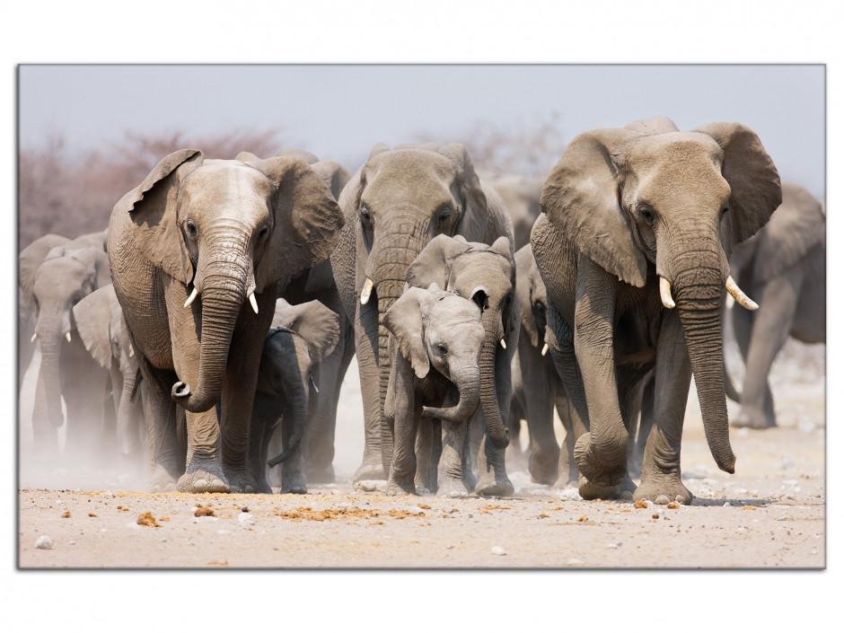 Tableau aluminium décoration murale les Eléphants