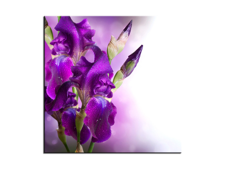 Tableau Aluminium deco Fleurs d'Iris