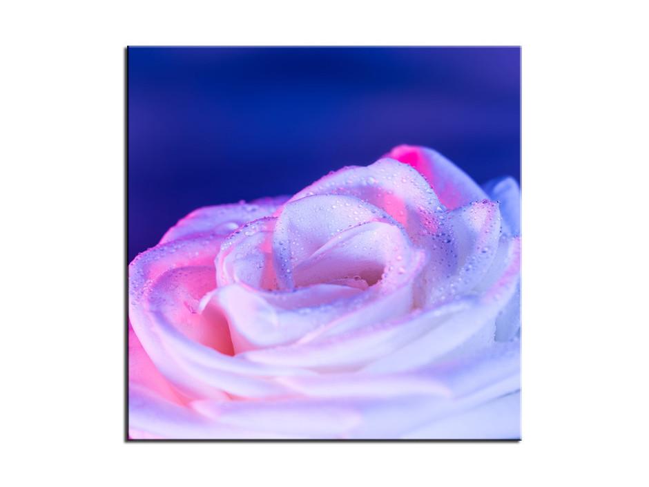 Tableau Aluminium deco Rose violette