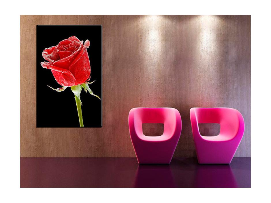 Tableau Aluminium deco rose sur fond noir