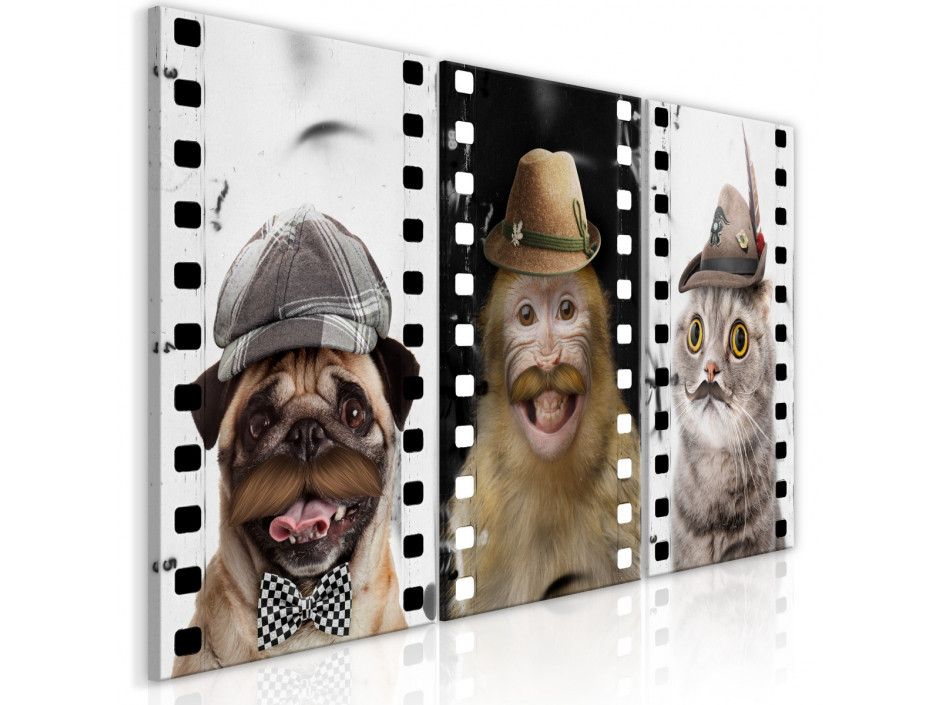 Tableau  Funny Pets (Collection)