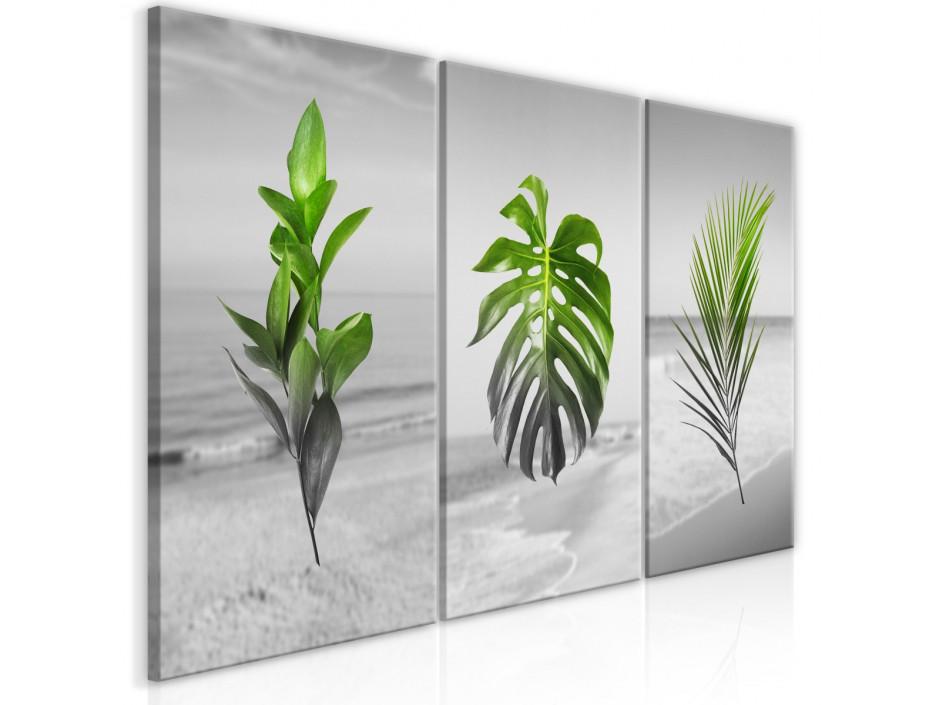 Tableau  Plants (Collection)