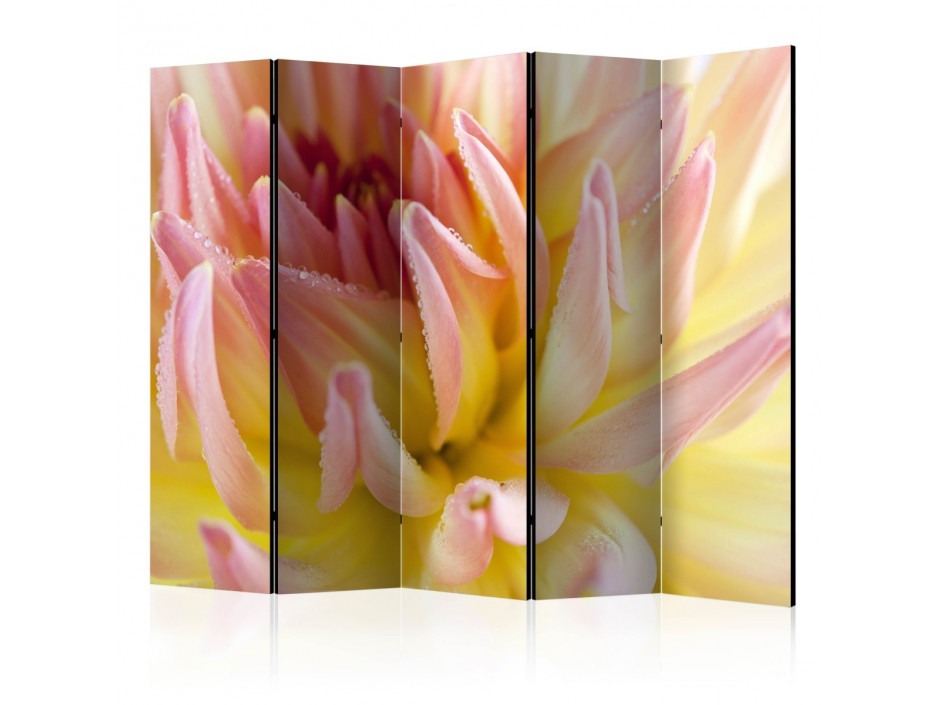 Paravent 5 volets  Pastel colored dahlia flower with dew drops II [Room Dividers]