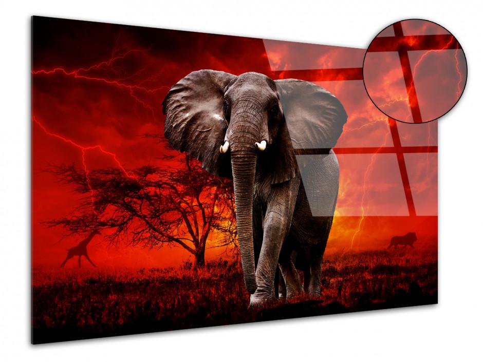 Tableau plexiglas éléphant sauvage SOUS LE TONNERRE