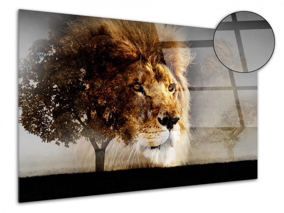 Tableau plexiglas photo LA SPLENDEUR DU LION