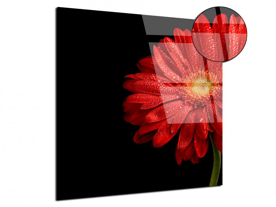 Tableau plexiglas deco Gerbera Rouge