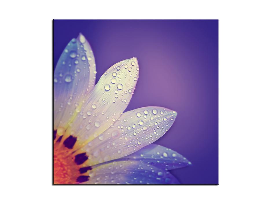 Tableau plexiglas deco pétale de fleurs violet