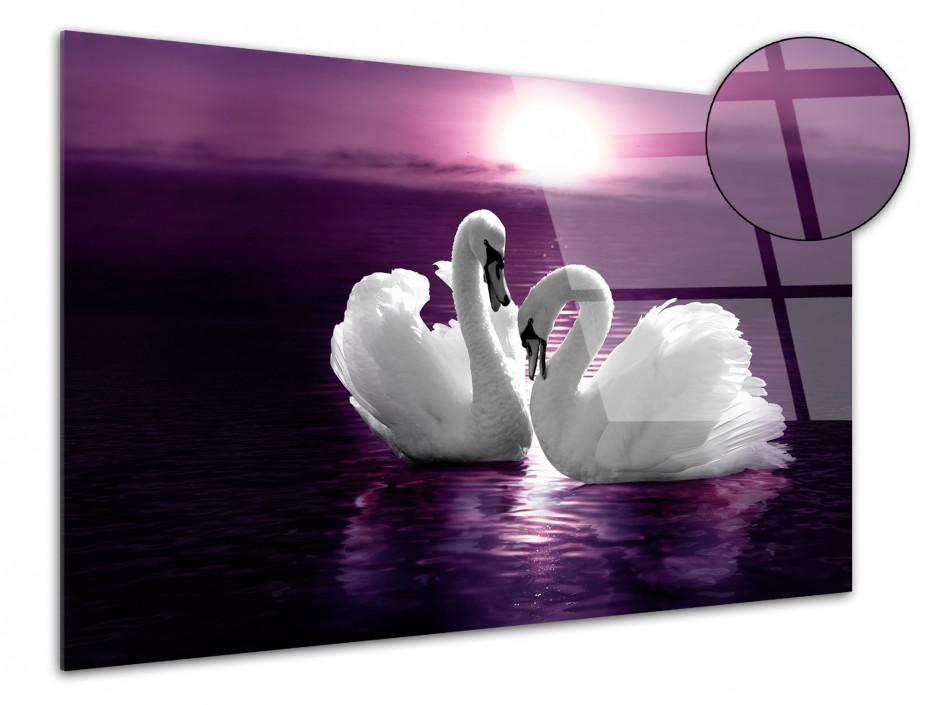 Tableau plexiglas décoratif couple de Cygnes